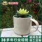 厂家直销 杯子盆多肉植物花盆 白陶陶瓷中温花盆花园摆设